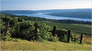 Keuka Lake vinyard
